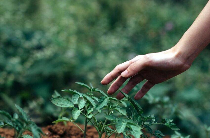 I plantoidi: le piante robot in aiuto della sostenibilità