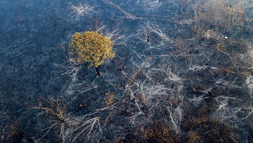 Perché il Brasile brucia? La risposta nella nuova campagna di Animal Equality